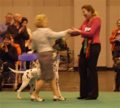 Awarding Best of Breed