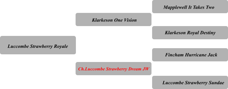 Luccombe Strawberry Royale Klarkeson One Vision Ch.Luccombe Strawberry Dream JW Mapplewell It Takes Two Klarkeson Royal Destiny Fincham Hurricane Jack Luccombe Strawberry Sundae